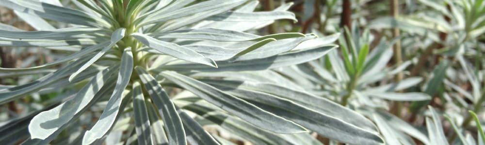 plantes grasses de la balade en gris CashPistache