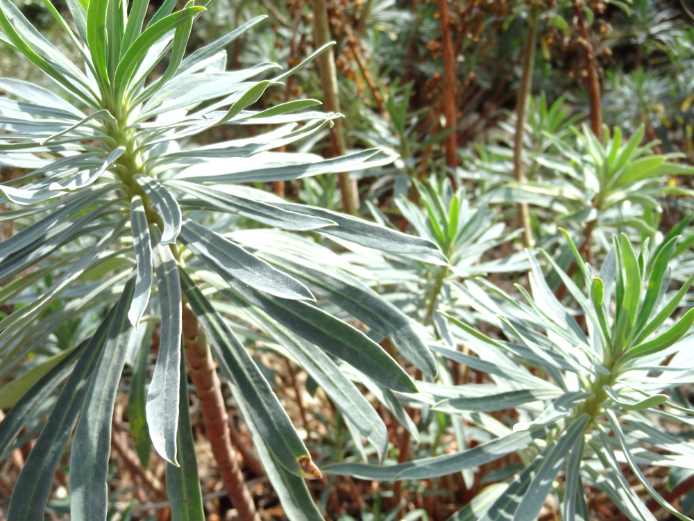 plantes grasses d'automne
