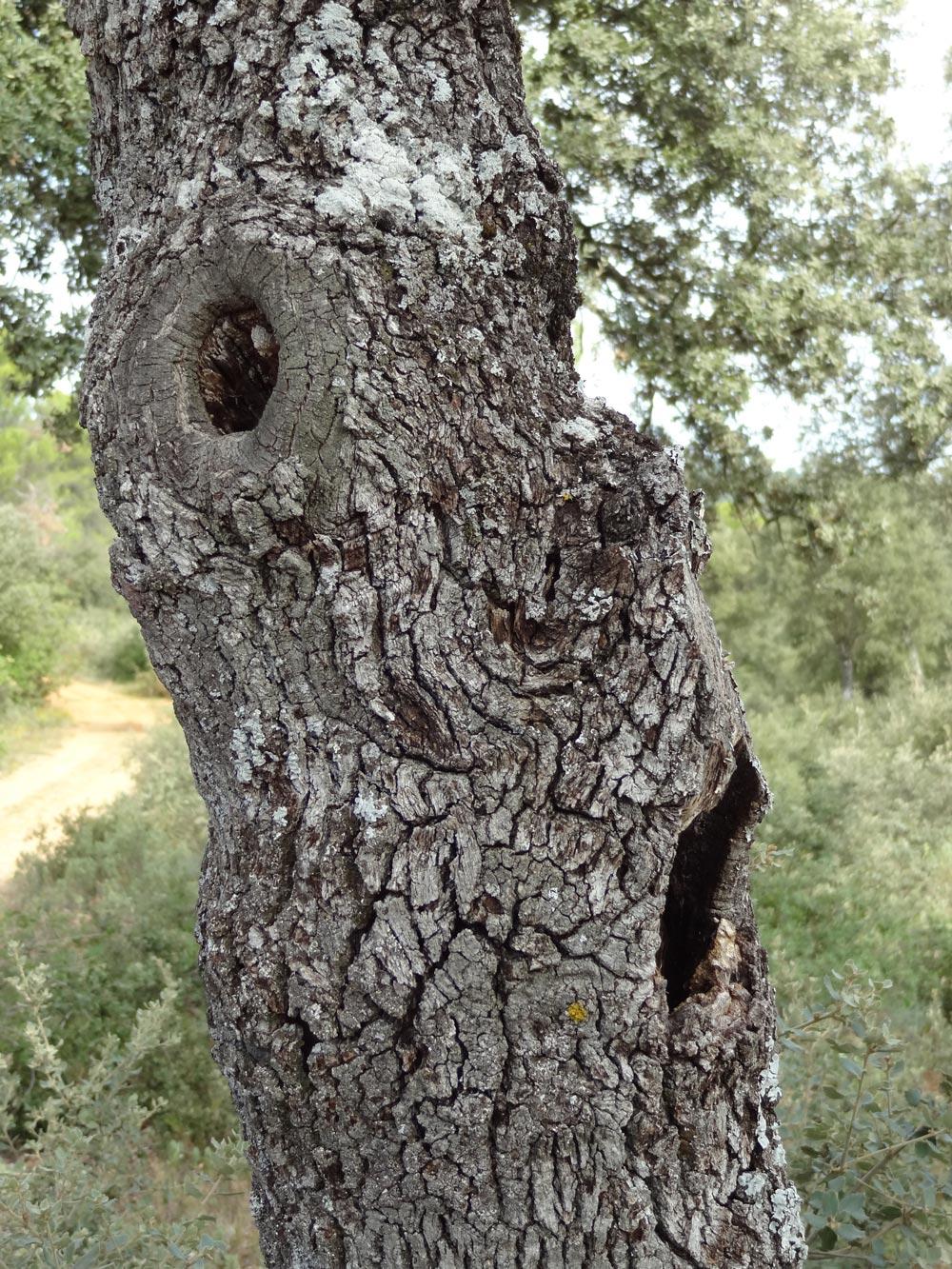arbre qui parle, de conte pour enfant