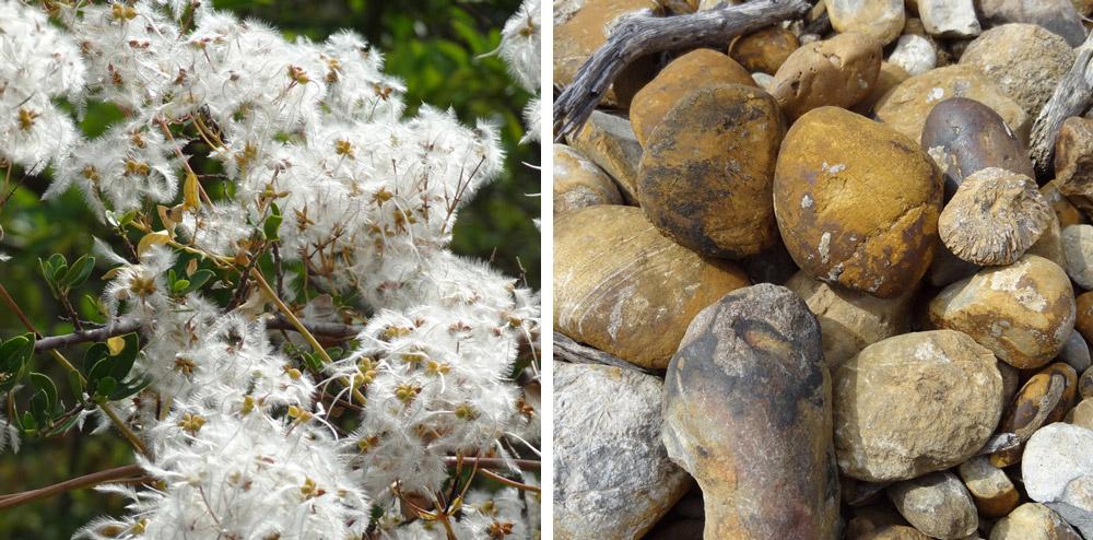 graines et cailloux pour minuscules insectes