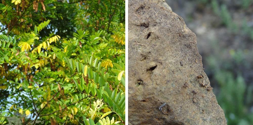feuillage automne et pierre habitée de minuscules