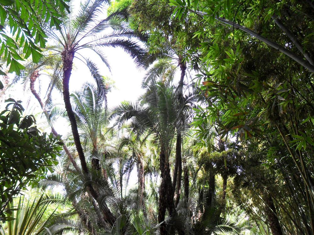 jardins majorelle Guéliz Marrakech centre à faire