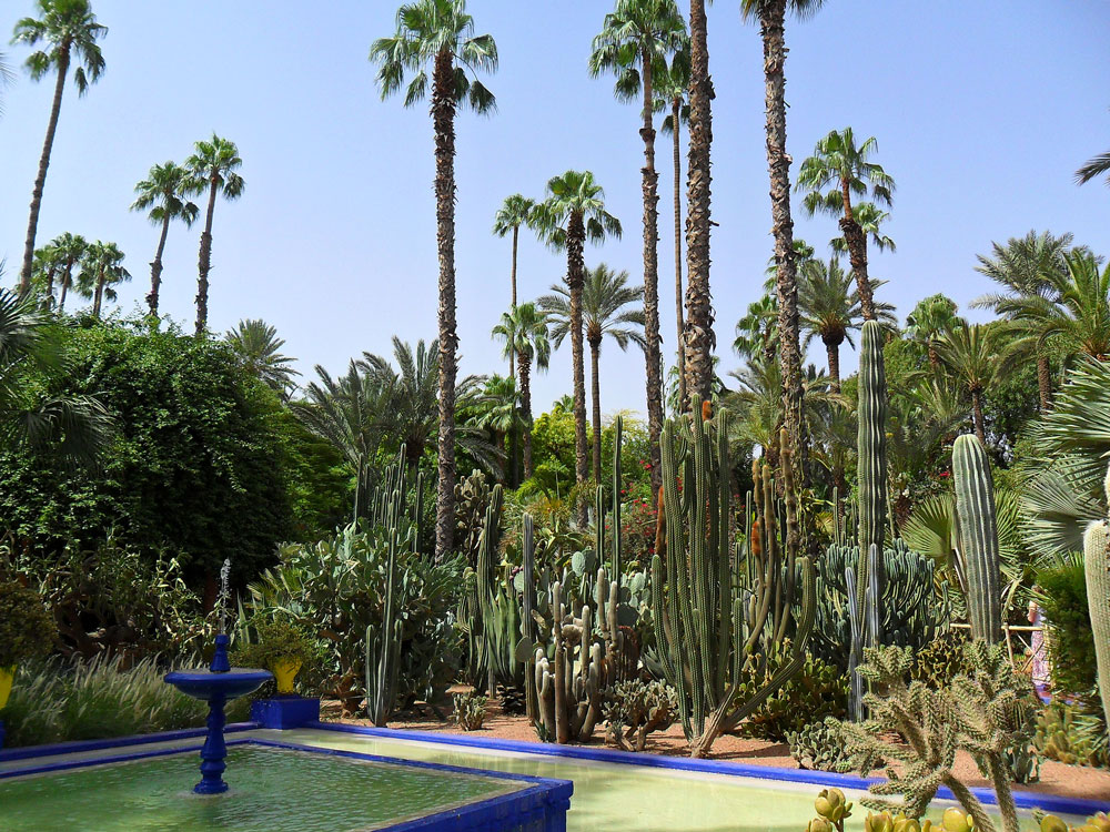 jardin exotique marrakech majorelle ysl le blog cash pistache. Black Bedroom Furniture Sets. Home Design Ideas