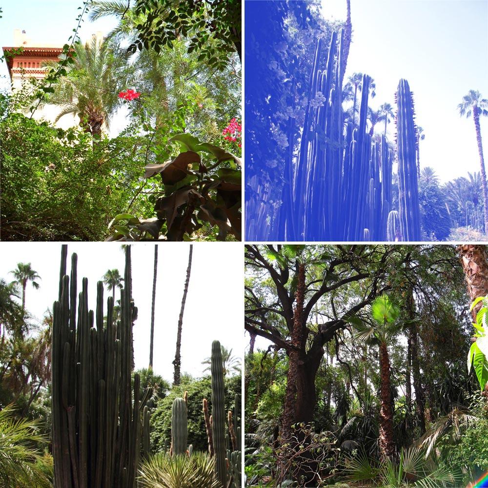 visiter Marrakech en 3 jours le jardin exotique majorelle
