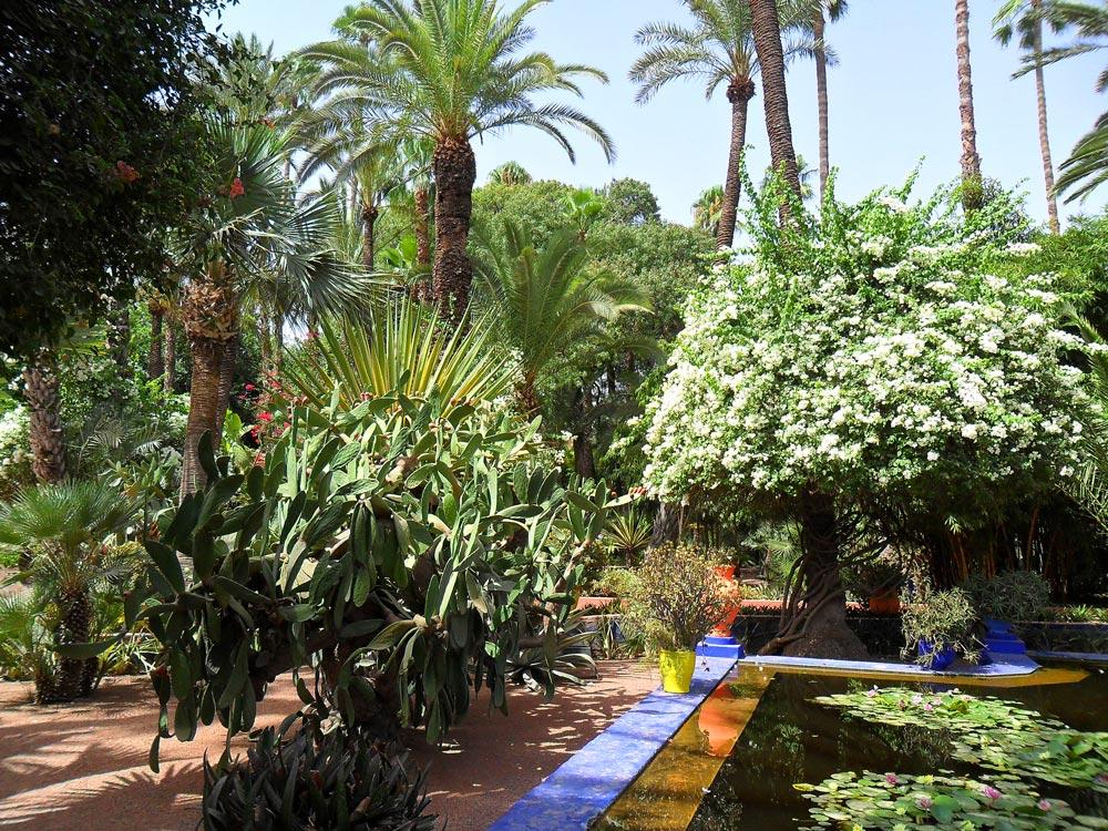 jardin exotique marrakech majorelle ysl le blog