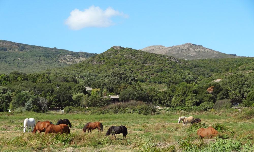 chevaux sauvages en corse randonnee