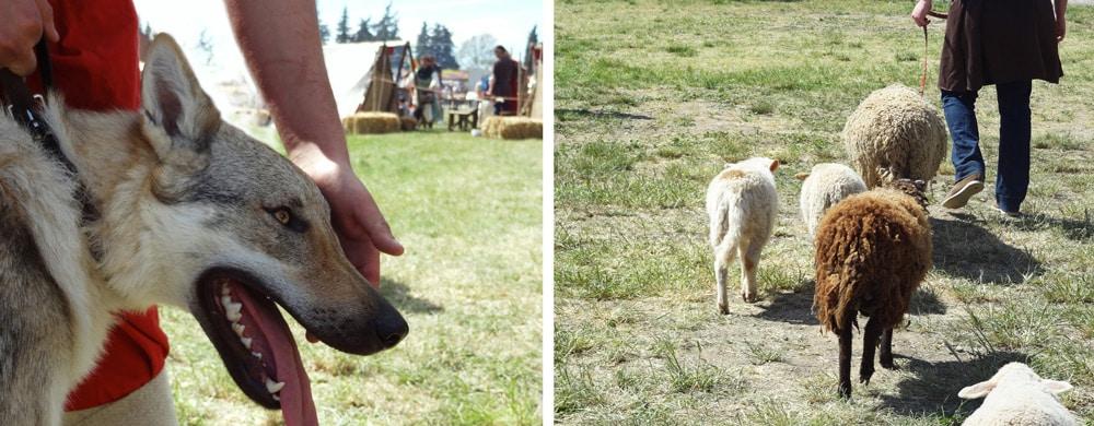 animaux du moyen-age loup, moutons, canards, âne, poules