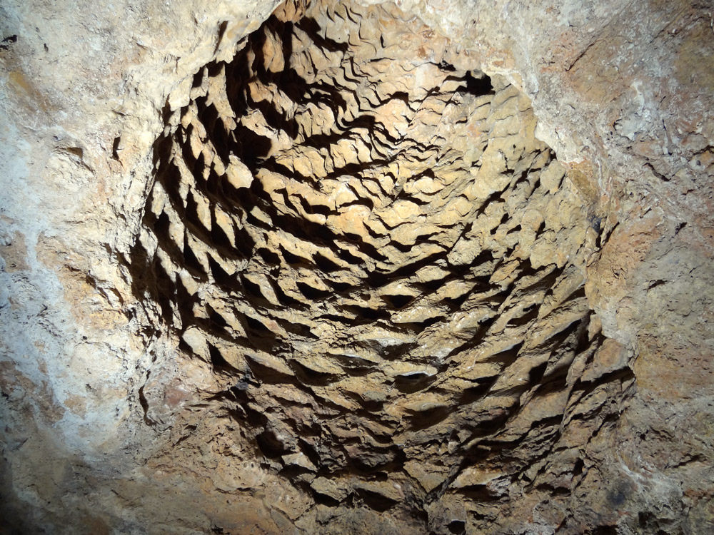 grotte aux palmiers fossiles fete medievale en Provence
