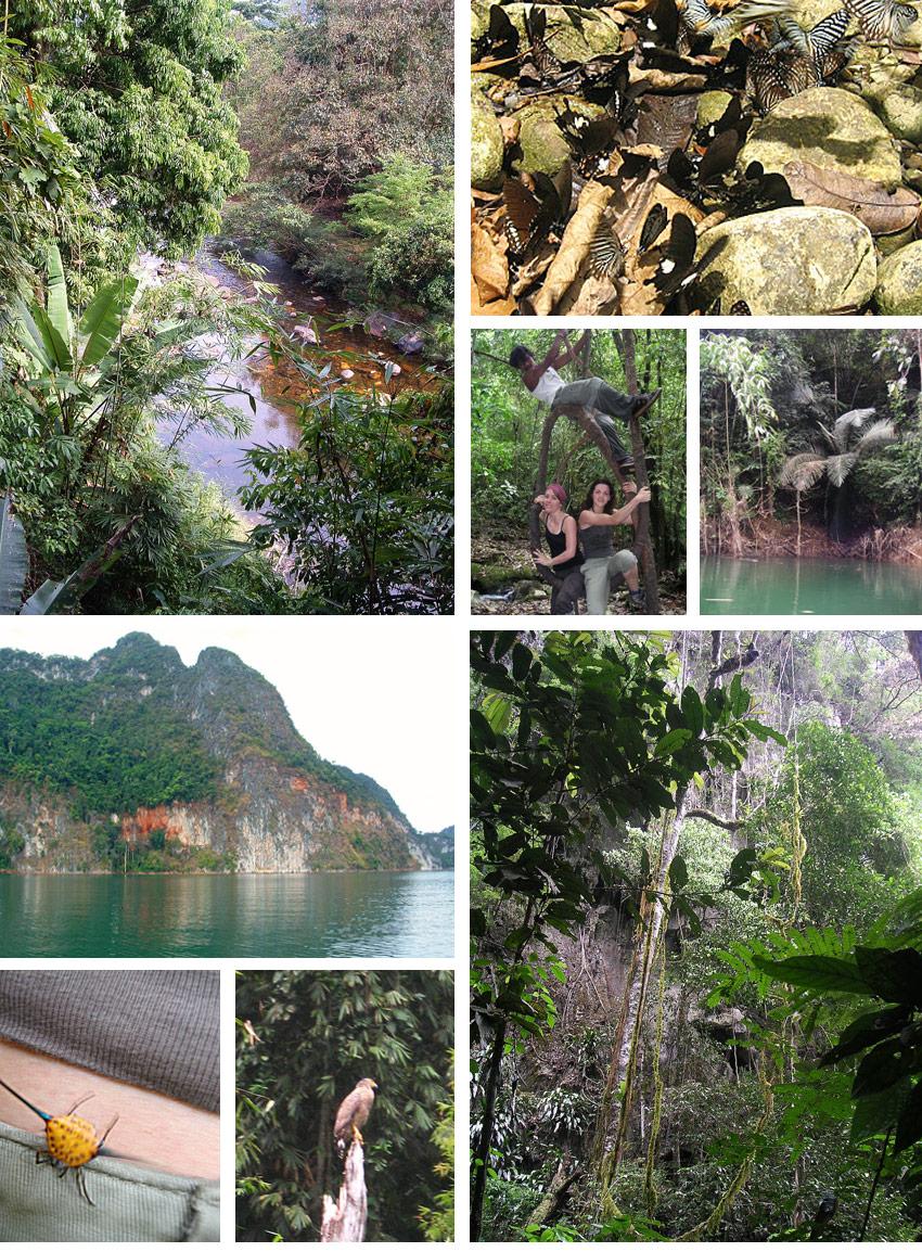 trekking et insectes dans la jungle de thailande khao sok
