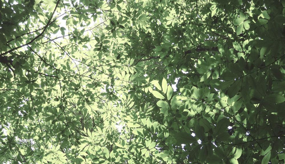 vintage festival de trets sous les arbres
