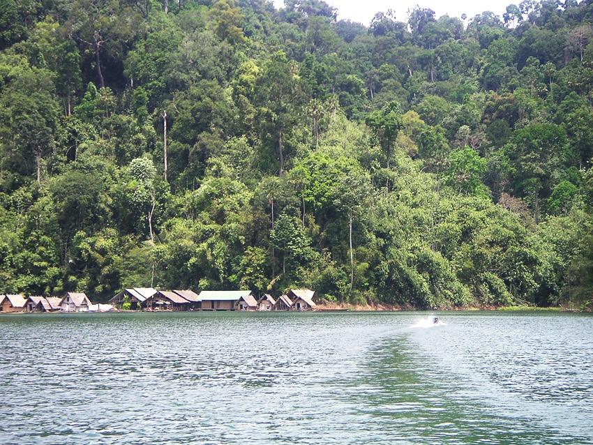 trekking dans la jungle de Thailande khao sok