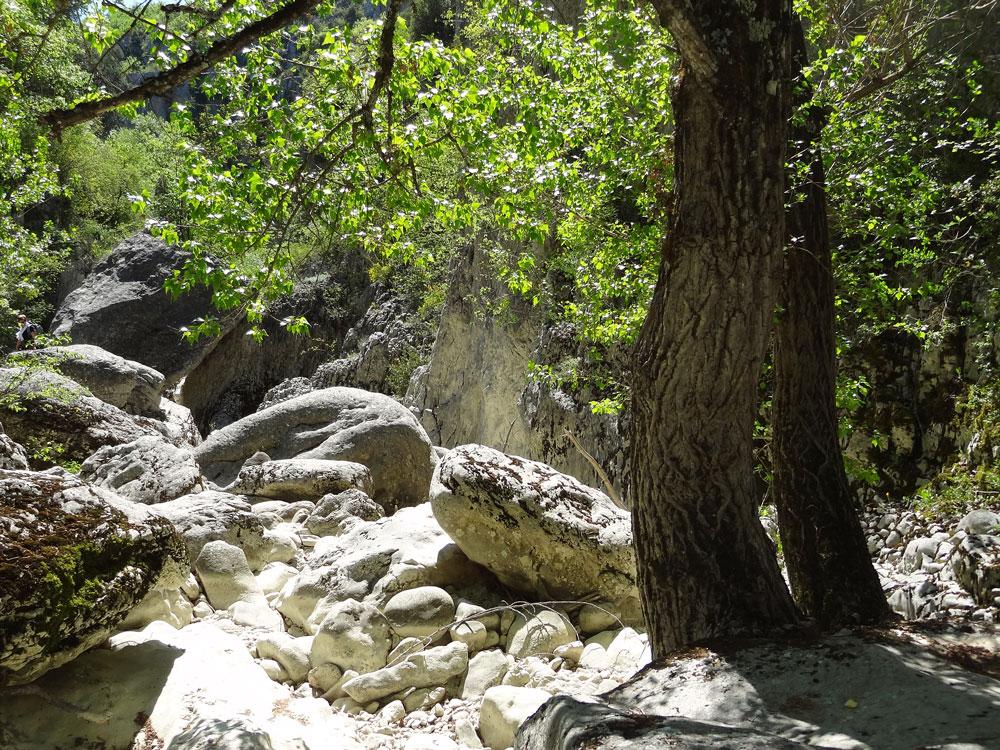 randonnées gorges d'Oppedette nature