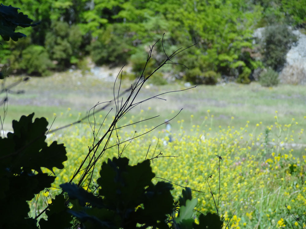 paysage de provence luberon oppedette
