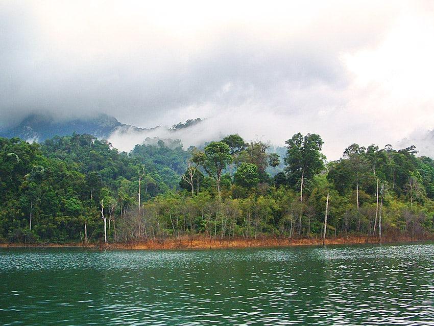 forêt vierge thaïlande vue du bateau