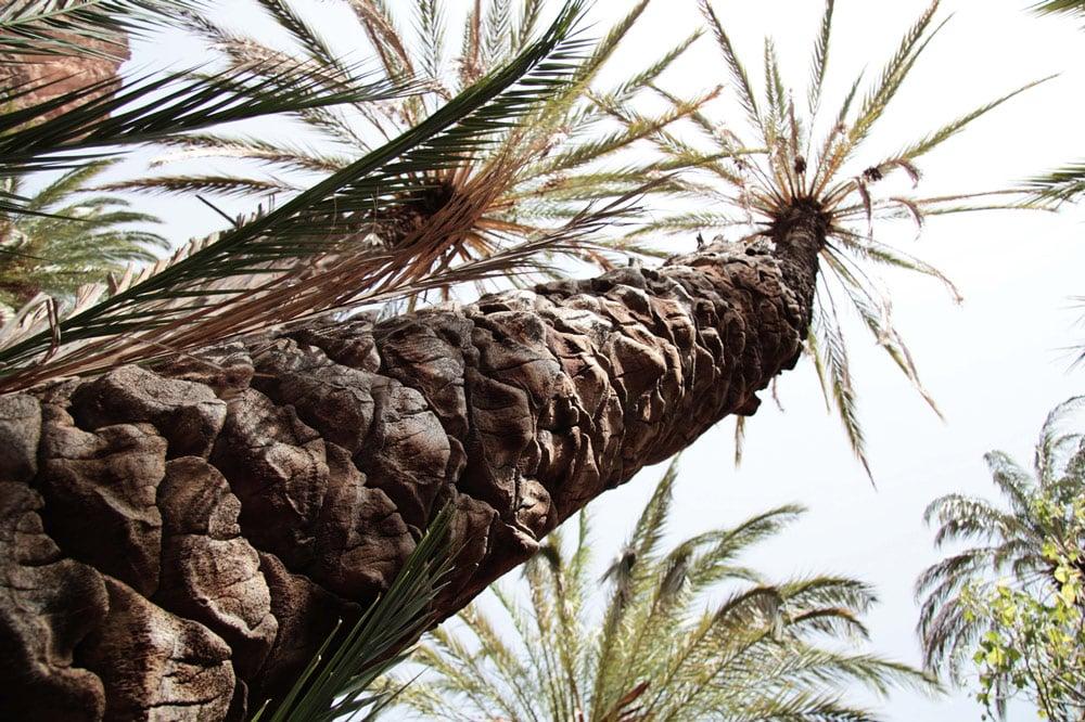 gorges-ait-mansour-sud-du-maroc-anti-atlas-palmeraie