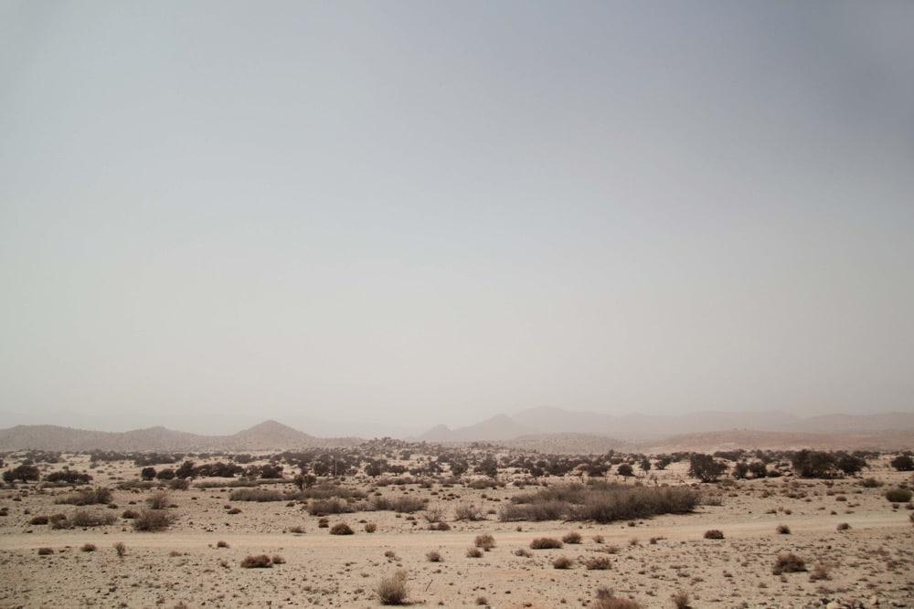tafraoute-vacances-au-maroc-insolite-road-trip