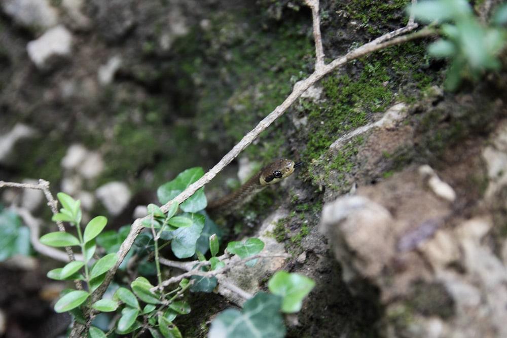 gorges-du-verdon-serpent-foret-de-provence-riviere
