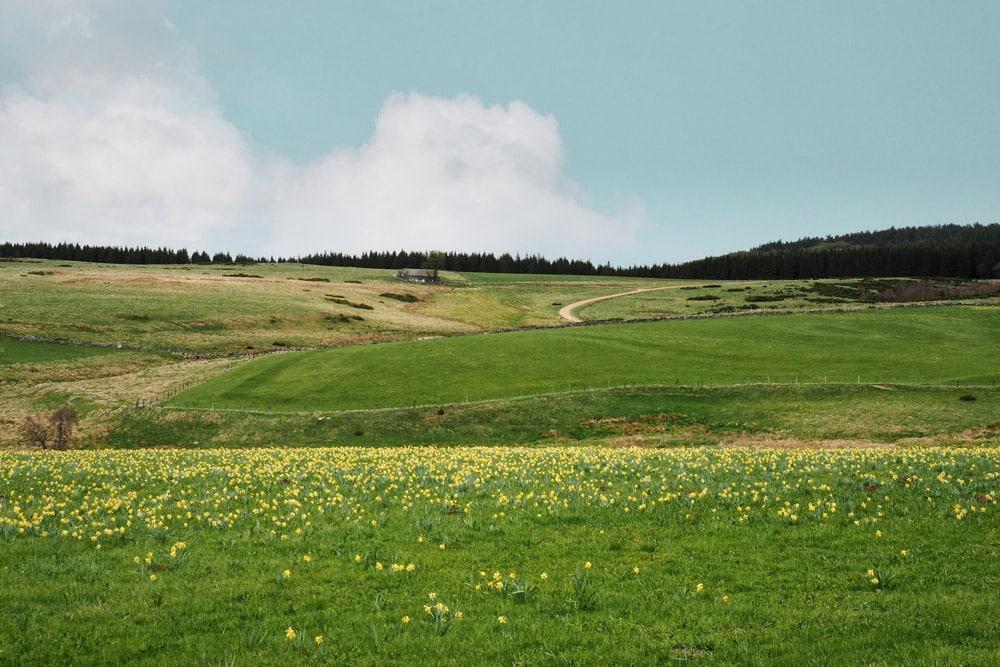 Sentier GR65 Compostelle Puy en Velay par la Via Podiensis