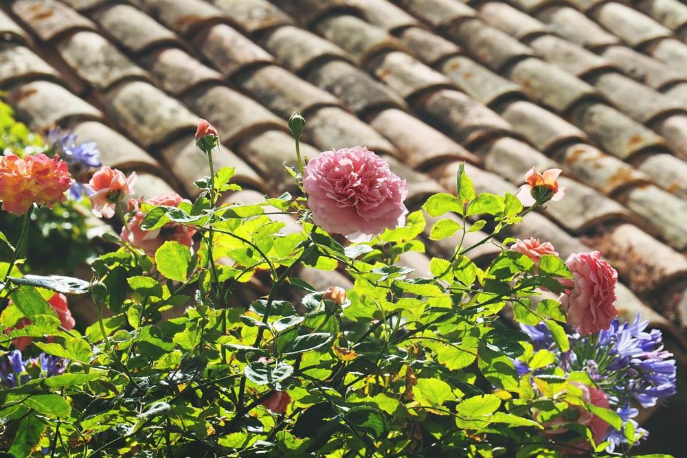 Visiter plus beau jardin sur Côte d'Azur
