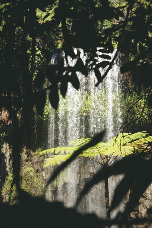 Circuit des cascades au sud de Cairns Australie