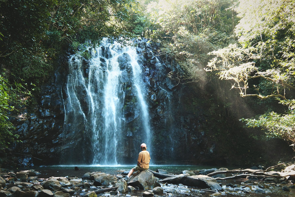 faire circuit Milaa Milaa falls au sud de Cairns Australie
