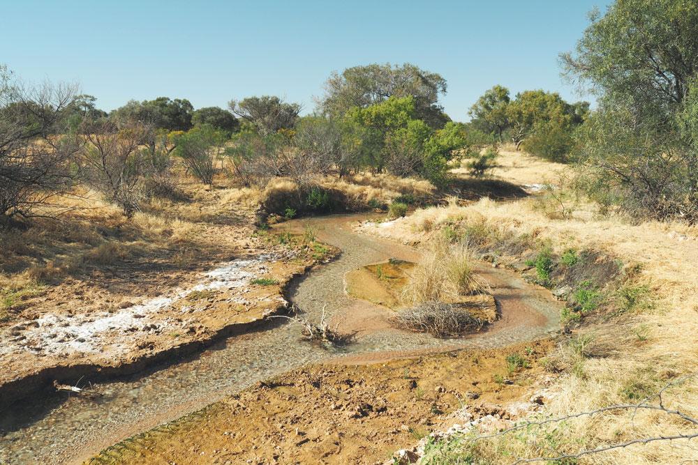 Source d'eau chaude dans le désert Simpson Birdsville track