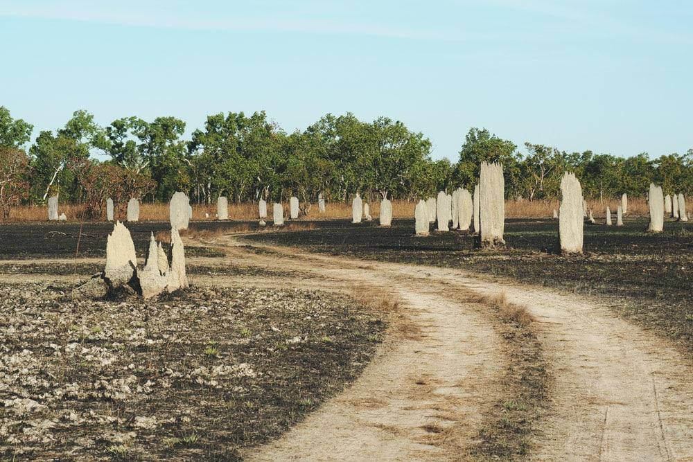 termitières magnétiques en Australie Parc Litchfield Darwin