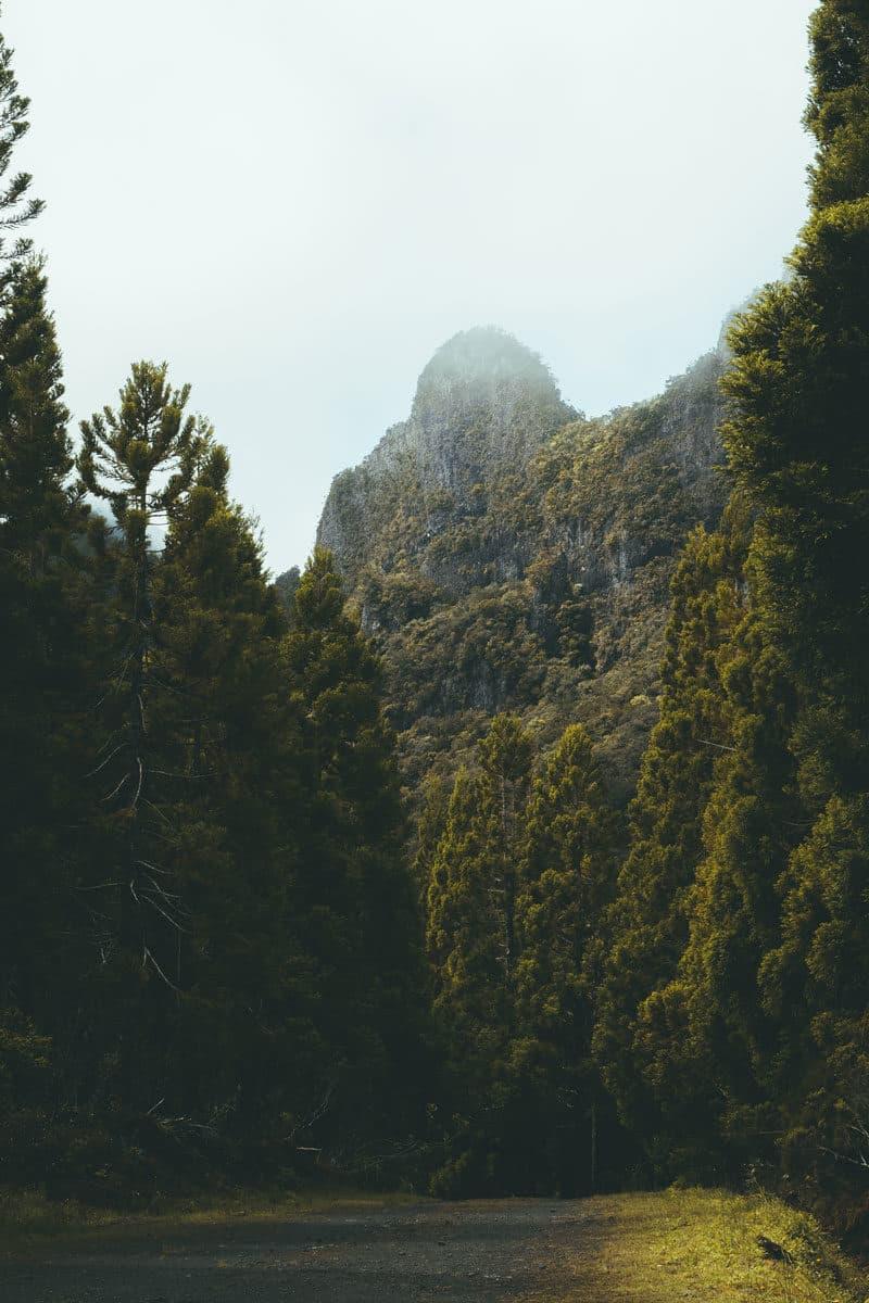 Col des Boeufs sentier Marla La Réunion