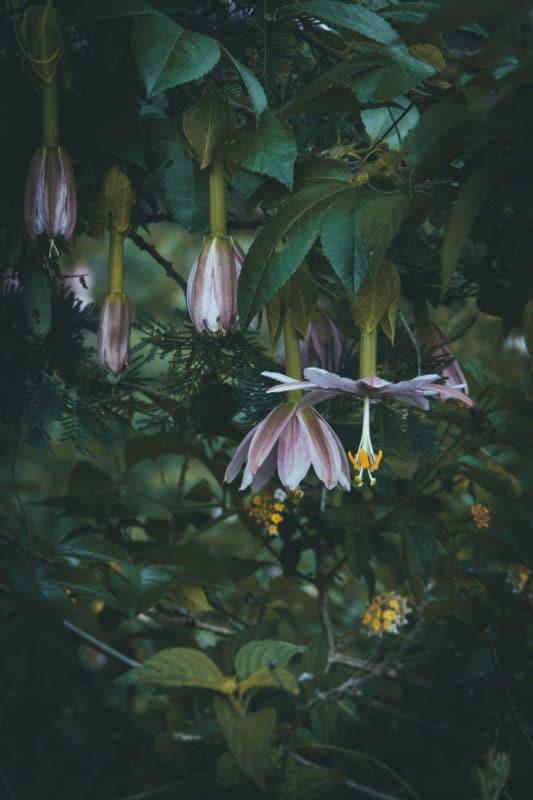 fleurs de La Réunion trek nature Marla Mafate