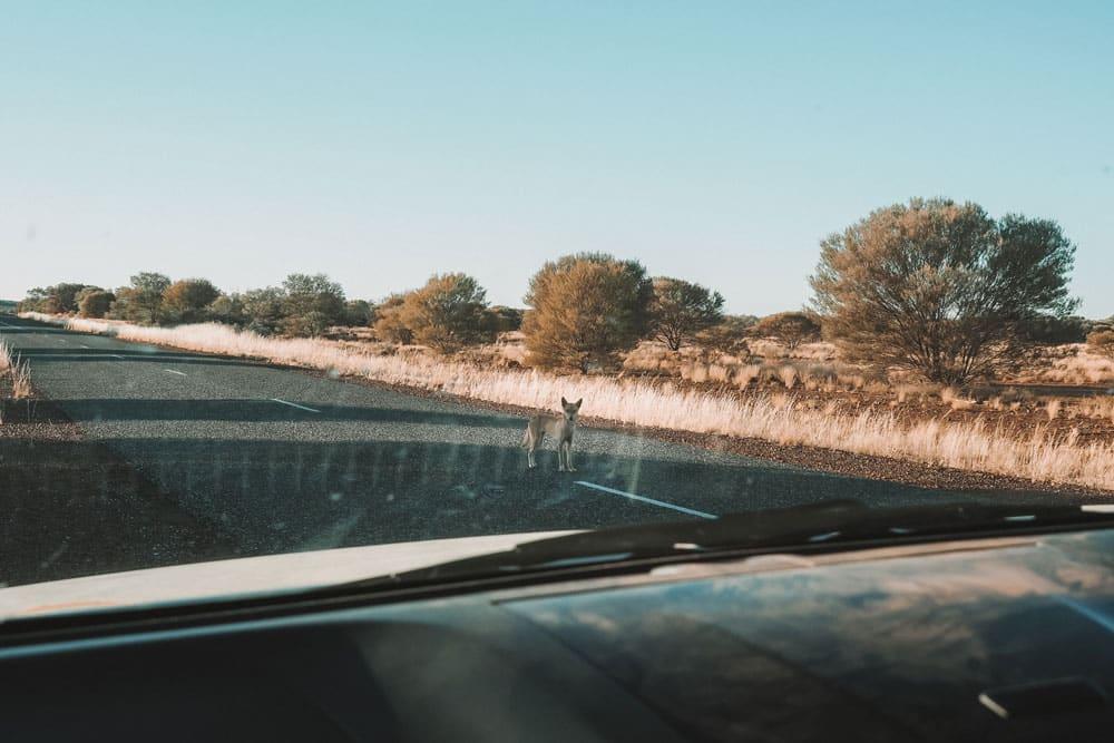 quels dangers raod trip en Australie