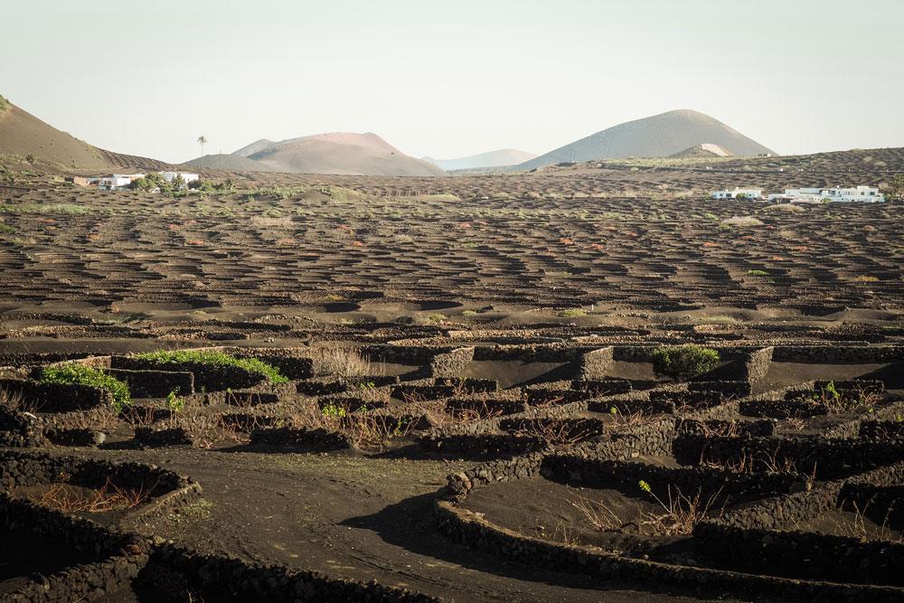 champs de vignes Lanzarote bodega Geria Canaries