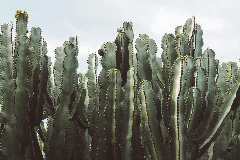 visite jardin de cactus Lanzarote artiste