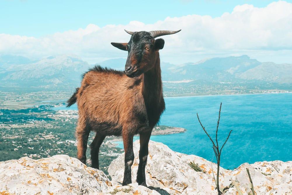 meilleures promenades insolites Majorque