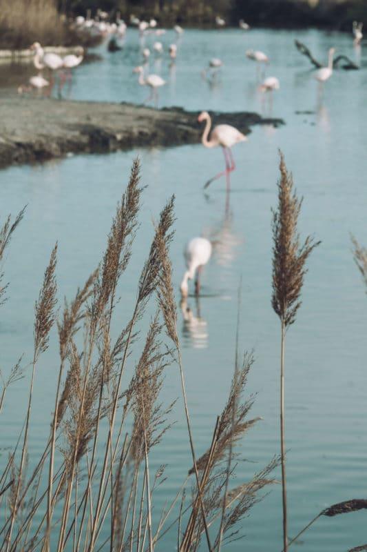 étang de Vaccarés Camargue repérer des flamants roses