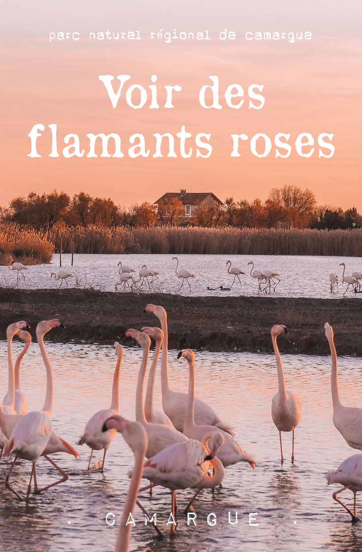 parc naturel regional de Camargue voir flamants rose