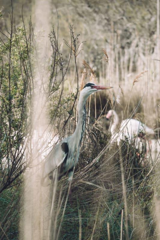 parc ornithologique Pont de Gau Stes Maries