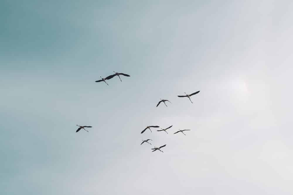 Quand visiter parc oiseaux Pont de Gau en Camargue