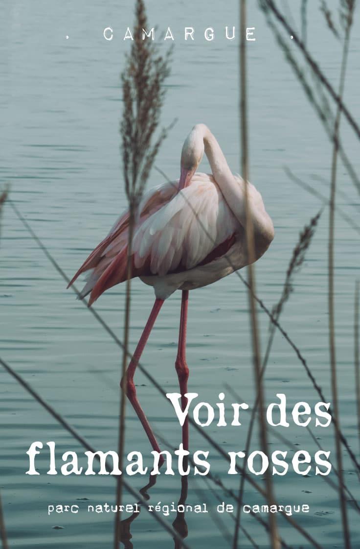 Quelle période pour voir des flamants roses en Camargue ?