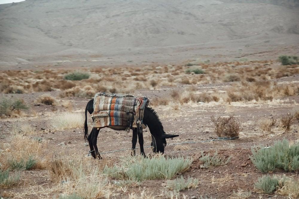 conduire au Maroc risques louer véhicule