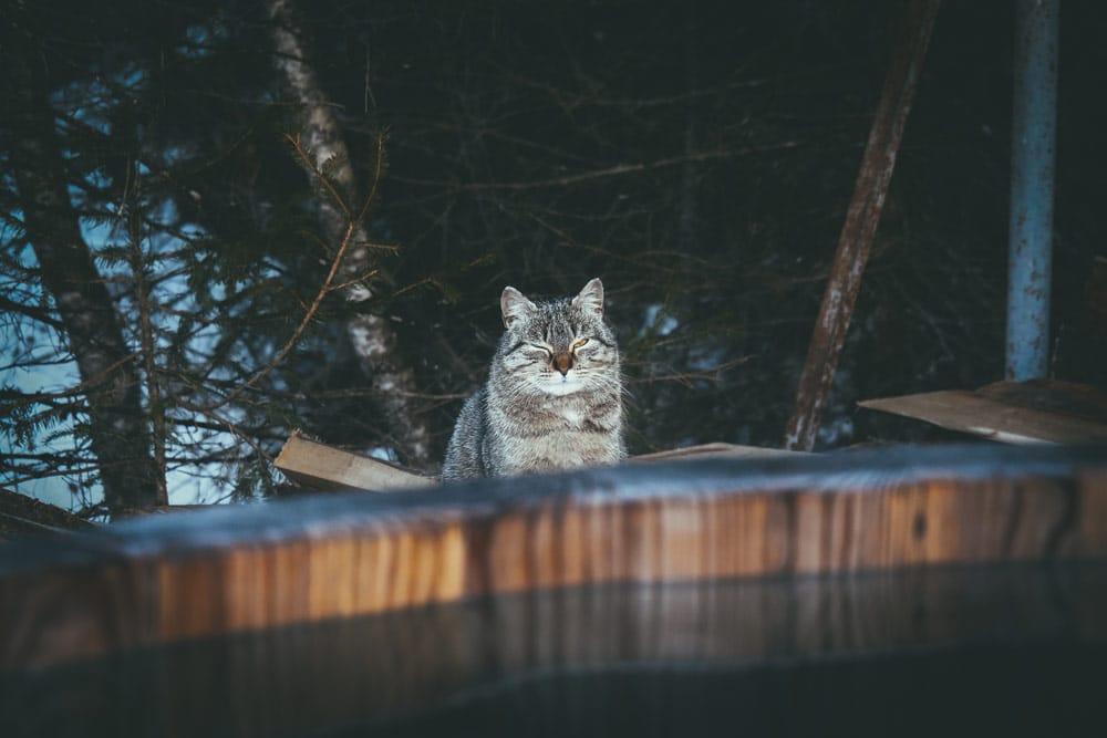 chats bains du Trappeur Champsaur