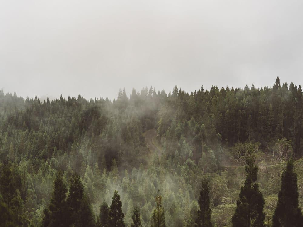 forêt Salazie départ randonnée Hell-Bourg
