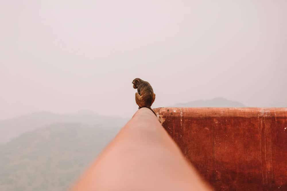 plus beau spot instagram Jaipur
