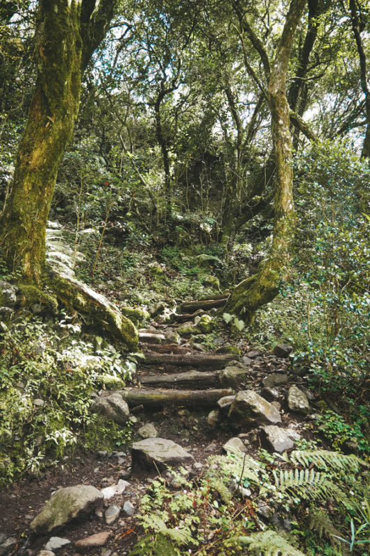 sentier du Trou de Fer île La Réunion