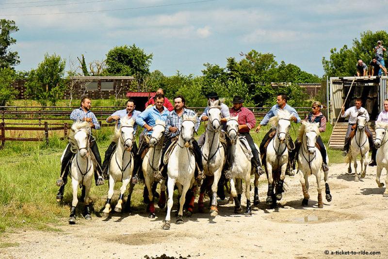 incontournables du Sud Camargue