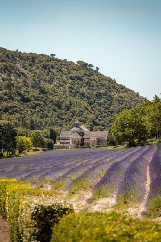 champs de lavandes du Luberon