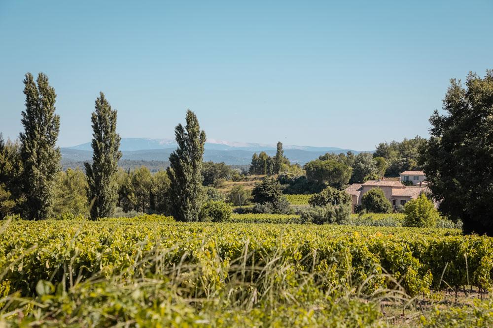 road trip vignobles du Luberon