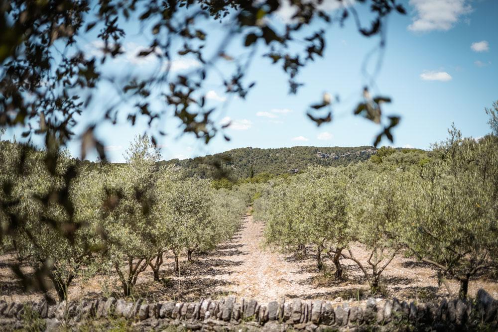 que faire dans le Luberon Provence