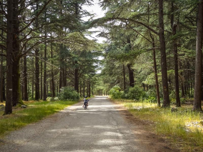 visiter forêt de Cèdres Vaucluse