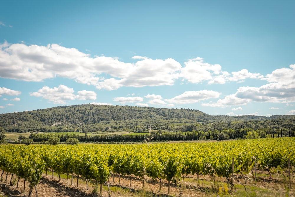visiter un vignoble dégustation vin du Luberon