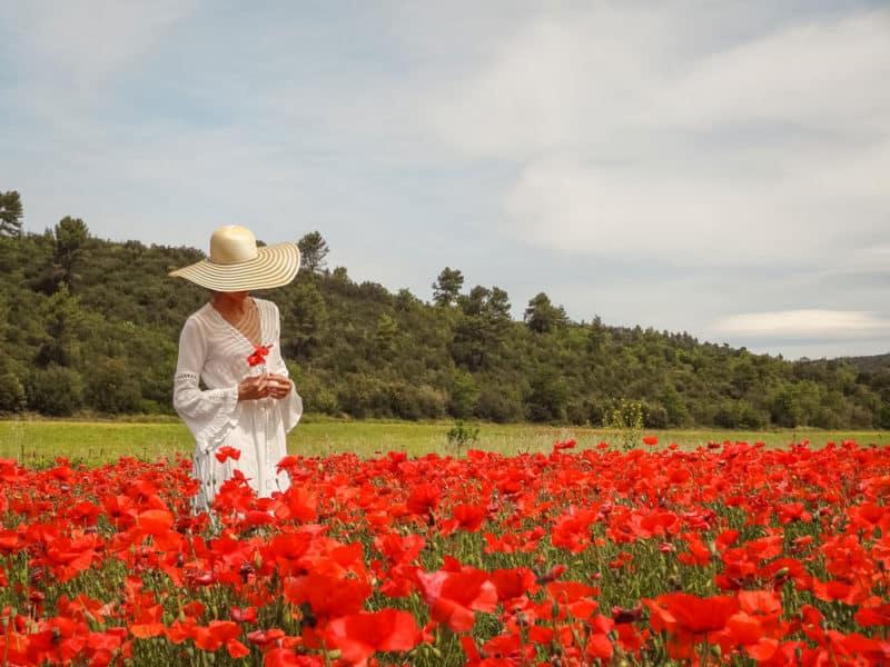 voir les champs de fleurs dans le Vaucluse